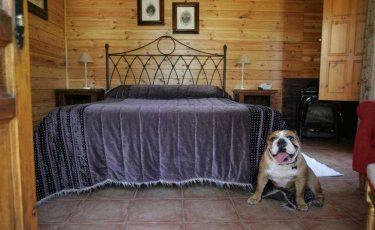 Hotel Albamanjon room with dog