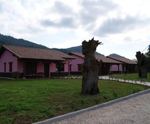 pet friendly apartments in avin, Asturias